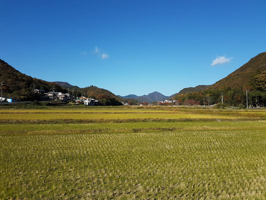 Rizières de Sasayama Hyogo