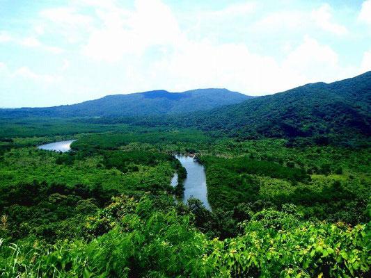 Forêt vierge Iriomote Okinawa
