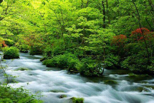 Gorge Oirase Aomori Tohoku
