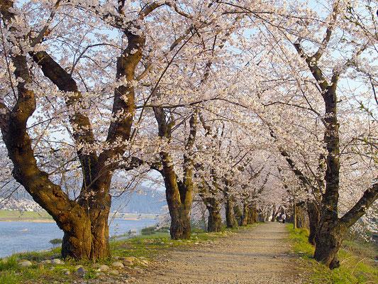 Un chemin reposant dans la préfecture d'Akita