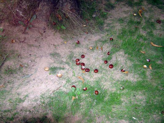Die Früchte der Bäume als Bastelmaterial
