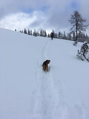 Skitouren Guiding