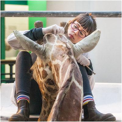 La fille qui peignait la girafe