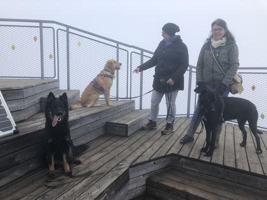 Gioia hilft beim Jahresabschluss der Hundeschule