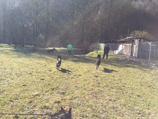Hundemesse in Winterthur; Pause mit meinen Freunden
