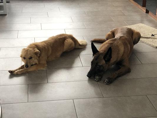 Suri und Black Jack vom Hause Diethelm