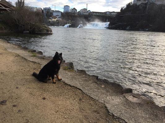 Bei Rheinfall; Wellen...komische Sache