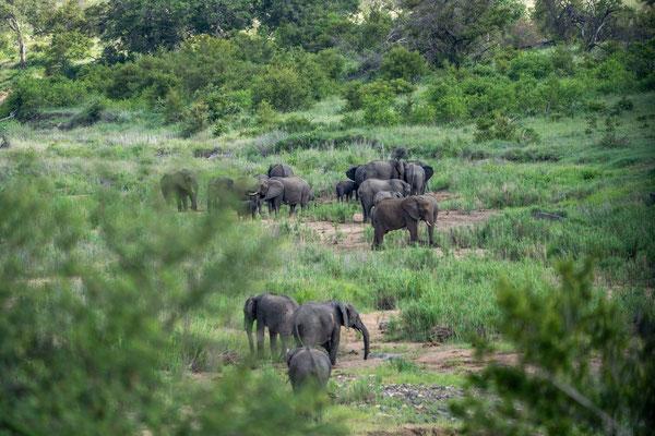 Eine Gruppe Elefanten zieht in einiger Entfernung Ihre Wege.