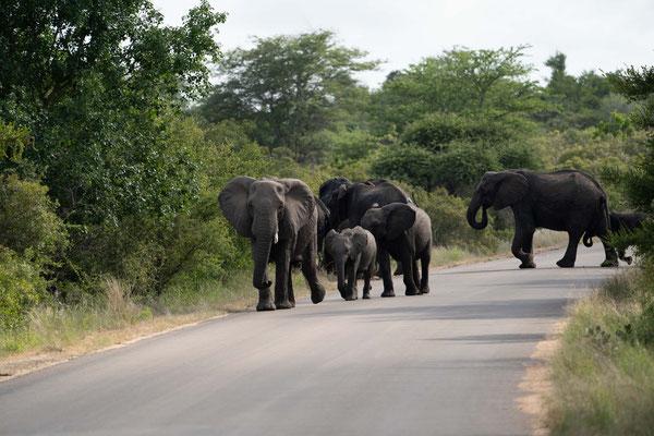 Und wieder eine Gruppe von Elefanten....