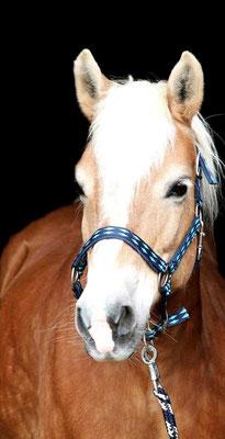 Führungskräfteseminar am Pferd