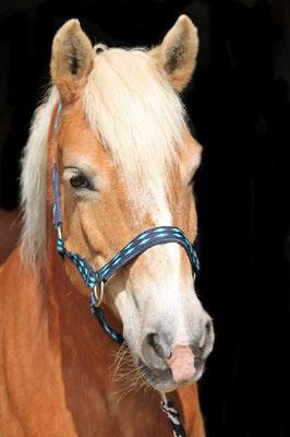 Coaching am Pferd