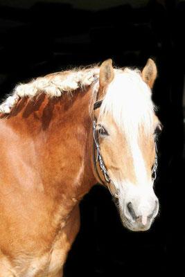 Seminare mit Pferd