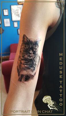 Portrait de mon chat - Méduse Tattoo en Belgique