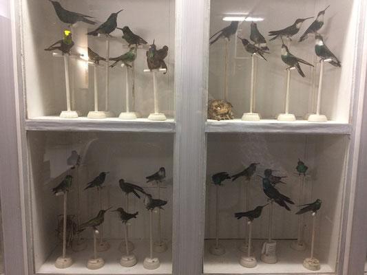 Kolibris im Schaukasten