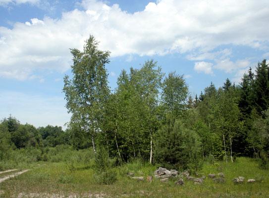 Brückengrube, Habitat des Wald-Wiesenvögelchens