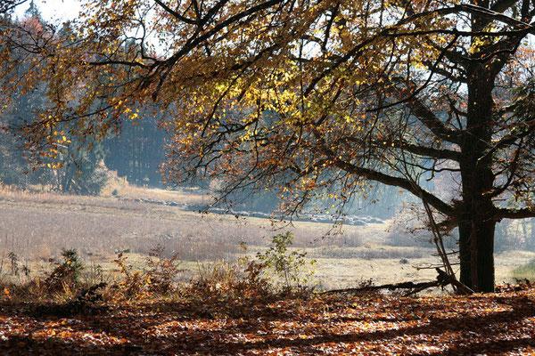 Hirschgrabenmoos, ein Hangmoor mit kalkhaltgen Quellaustritten