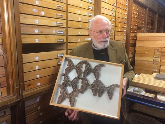 Manfred Siering erläutert die Schmetterlinge