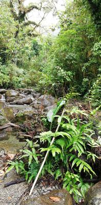 Unser natürliche Regenschutz