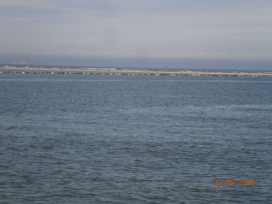 Seehundbank bei Melum