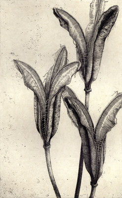 """Leaves #06""<br>エッチング、雁皮刷り<br>23.7×14.8cm/ED.15"