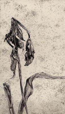 """Leaves #07""<br>エッチング、雁皮刷り<br>20×11.5cm/ED.15"