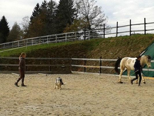 Cours travail à pied avec Mathilde et Kenzo