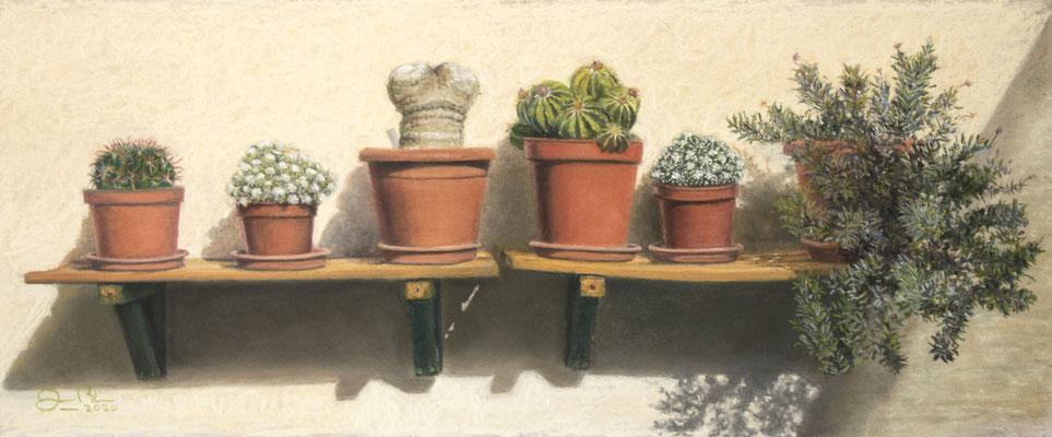 LA REPISA DE LOS CACTUS - Pastel sobre tabla (50 x 21) - 08/2020 (En venta)