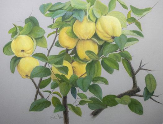 MEMBRILLOS -Pastel sobre papel Canson (52 x 40) - 2020 (En venta)