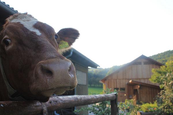 Auch Kühe können fotogen sein!