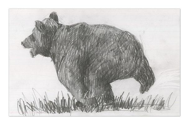 bears II