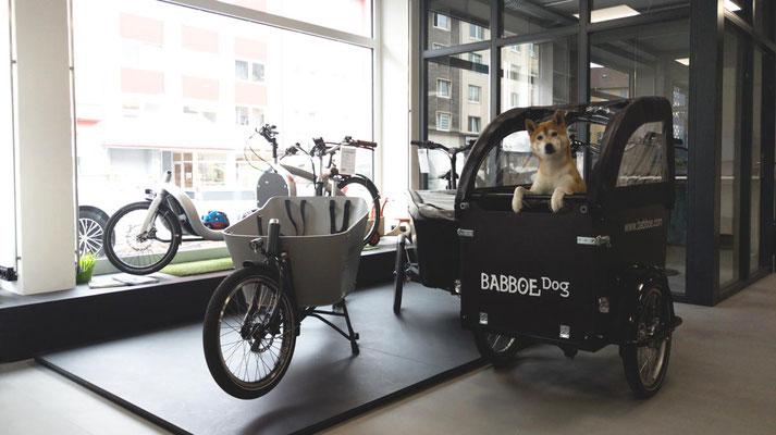 Cargo e-Bike kaufen in Bochum