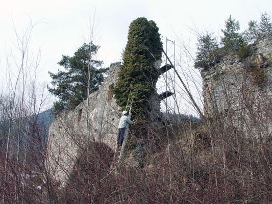 Das mit Efeu dicht bewachsene Halbrondell auf der Südseite war ostseitig eingestürzt.