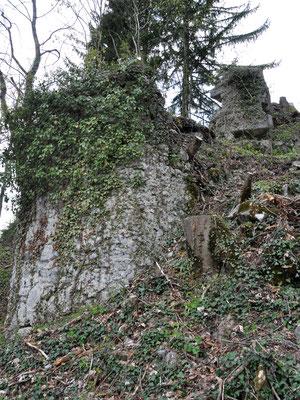 Vom Efeu dicht überwuchert war der Zwinger vor der Ostmauer kaum mehr zu sehen.