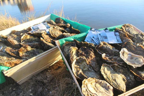 Bourriches d'huîtres Marennes-Oléron