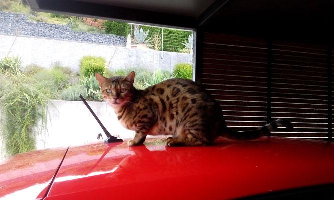 Chili bewacht mein Auto :-)