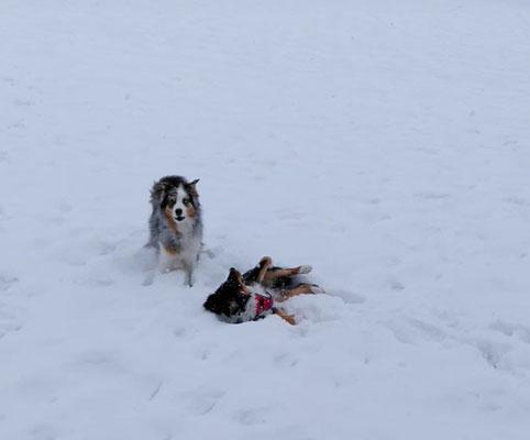 Mit Jax im Schnee!