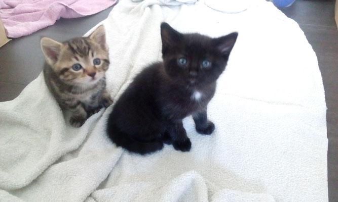 Kitten <3 <3