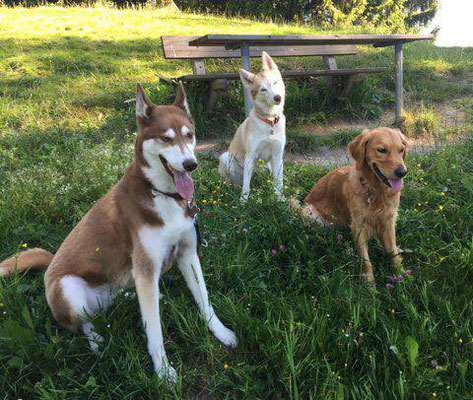 Lucy, Sara, Lacky