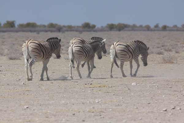NAMIBIA - ANIMALS 07