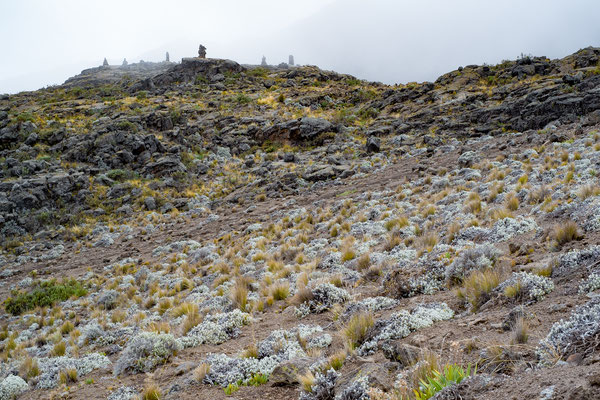 Kilimanjaro 25