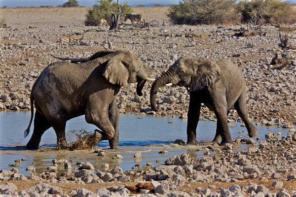 NAMIBIA - ANIMALS 03