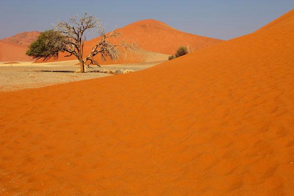 Namib Desert (Namibia)
