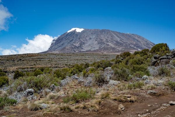 Kilimanjaro 05
