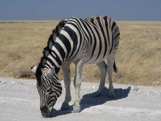 NAMIBIA - ANIMALS 59