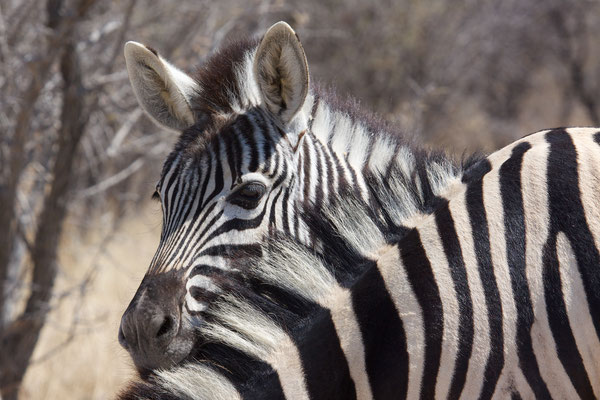 NAMIBIA - ANIMALS 22