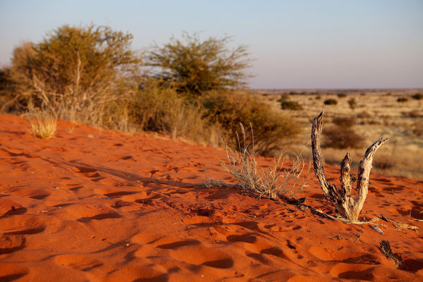 NAMIBIA - LANDSCAPES 03