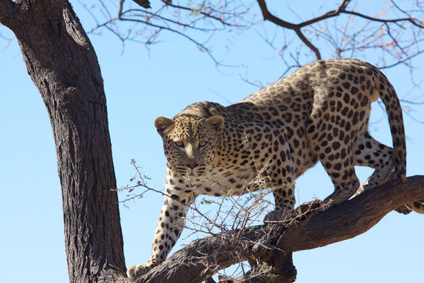 NAMIBIA - ANIMALS 41