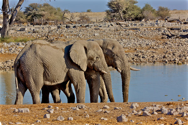 NAMIBIA - ANIMALS 04