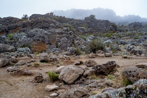 Kilimanjaro 17