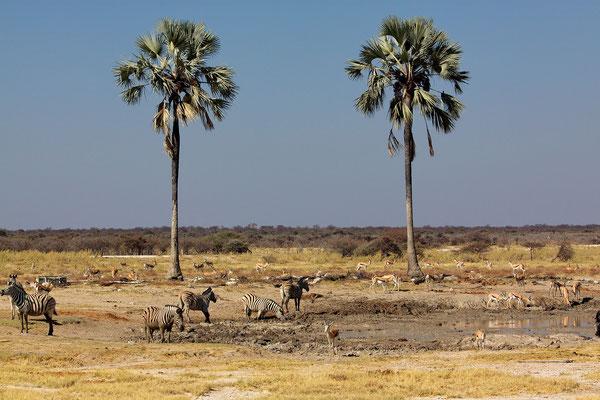 NAMIBIA - LANDSCAPES 02